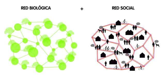 BUM red biológica + red social 01